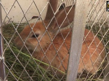 Rabbit Value Addition in Agri-business
