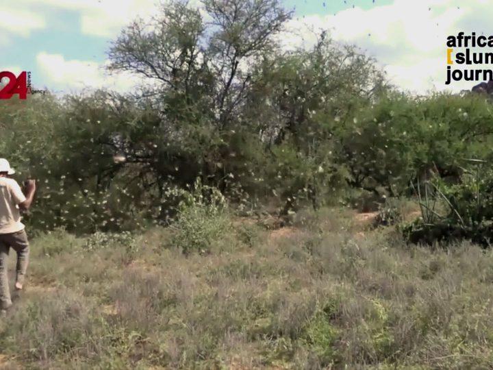 Locust Invasion in Kenya