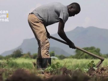 Addressing Food Insecurity through Modern Farming Techniques