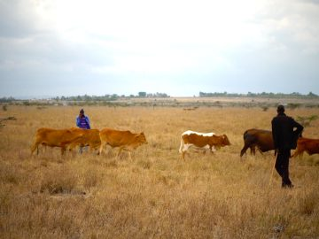 The Transitioning Culture of the Maasai